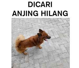 Iklan Anjing Hilang