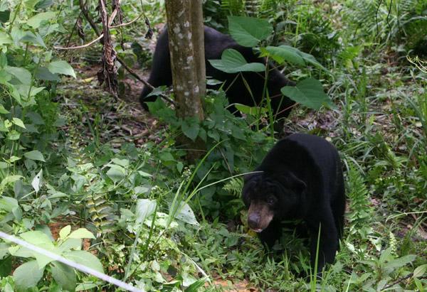 Kalimantan Timur Ku Kawasan Wisata Pendidikan Lingkungan