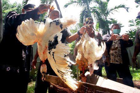 ANTISIPASI FLU BURUNG : Sudin Peternakan merazia unggas-unggas yang di pelihara warga didekat rumah mereka di Slipi, Jakarta Barat. Razia tersebut dilakukan untuk mengantisipasi menyebarnya virus flu burung.