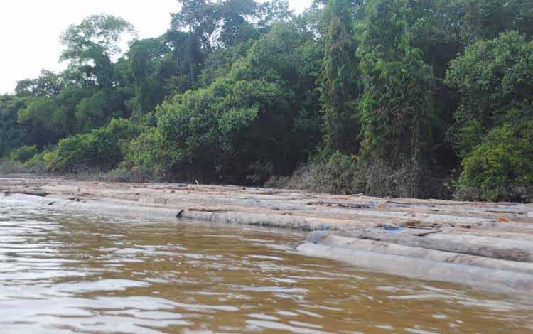 Ribuan kayu yang diamankan pihak Kodim 1013 Muara Teweh, di Sungai Kecamtan Lahei, beberapa waktu lalu. BORNEONEWS/RAMADANI