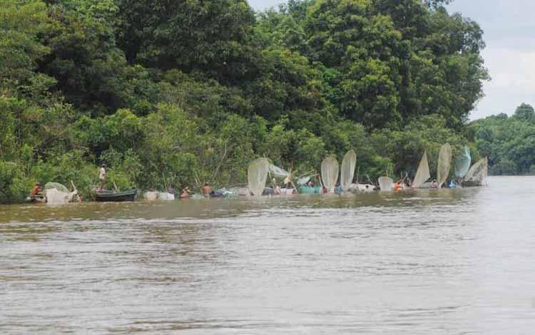 Sejumlah warga Desa Mampun Kecamatan Dusun Selatan mencari ikan saat kondisi air di Sungai Barito mulai surut. BORNEONEWS/LAILY MANSYUR
