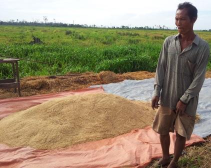 Petani menjemur gabah hasil panen. BORNEONEWS/YOHANES