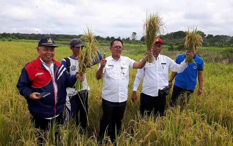 Kepala DP3KP Kabupaten Kotim I Made Dikantara (tengah) saat panen raya di Kecamatan Kotabesi, Kotim, beberapa waktu lalu. BORNEONEWS/M.RIFQI.