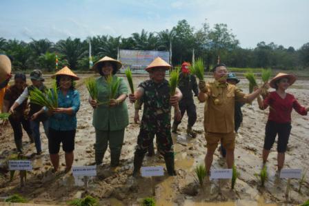 Panglima Kodam XII/Tanjungpura Mayjen TNI Agung Risdhianto, M.D.A. bersama Gubernur Kalimantan Barat Drs. Cornelis, M.H. melakukan tanam padi perdana. (BORNEO/DOK)