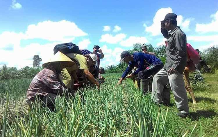 Kabid Holtikultura Dinas Pertanian Tanaman Pangan dan Holtikultura (Distantura) Kapuas Rengkesit mengunjungi Petani Kematangan Bawang, Kecamatan Dadahup. BORNEONEWS/DJEMMY NAPOLEON