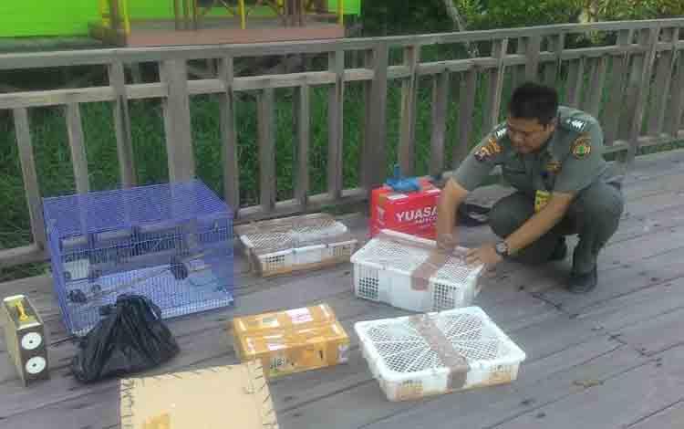 Salah seorang petugas dari BKSDA sedang melepasliarkan burung-burung di Suaka Margasatwa Lamandau.