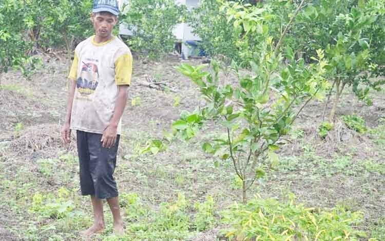 Sunar, petani di Desa Pulu Nibung, Kecamatan Jelai Kabupaten Sukamara. (BORNEONEWS/NORHASANA)