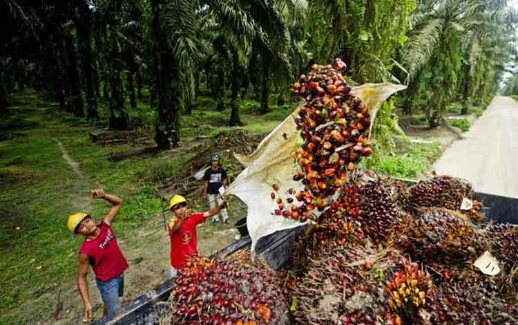 Ini Cara Malaysia Majukan Industri Sawit