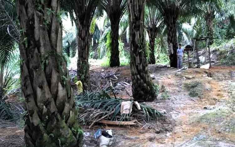 Kepemilikan Lahan Hambat Alokasi Dana Peremajaan Kebun Sawit