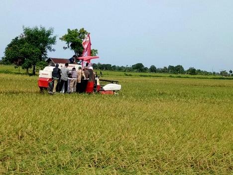 Mesin pemanen padi di hamparan sawah di Desa Jaya Makmur, Kecamatan Katingan Kuala bersiap memanen padi. Selama ini gabah asal wilayah ini banyak dibawa ke Banjarmasin.\\r\\n