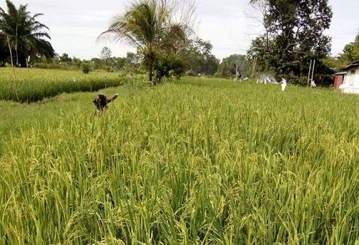 Produksi Pertanian Dan Perikanan Akan Naik Jika Pemerintah Serius