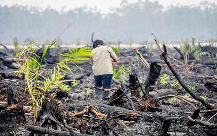 Dpr Permen Lhk Tentang Hutan Tanaman Industri Rugikan Usaha Rakyat