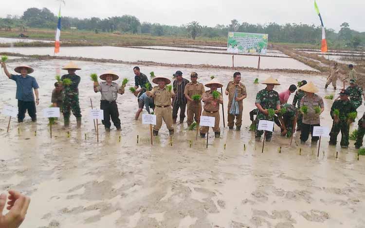 Kegiatan penanaman perdana padi untuk musim tanam April-September 2017 di lahan pertanian sakata juri Kuala Kurun, Kabupaten Gunung Mas, Senin (10/7/2017).