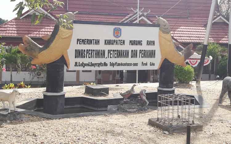 Pemkab Mura Siapkan 20 Hektare Lahan untuk Peternakan Sapi