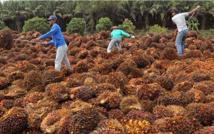 Austindo Nusantara Jaya Yakin Produksi CPO Capai 211.136 Ton