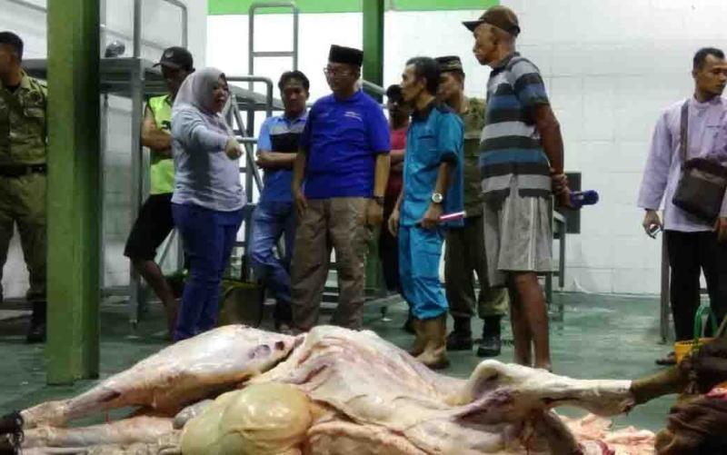 Bupati Kotawaringin Barat Hj Nurhidayah dan Kepala DPKH, Rosihan Pribadi saat sidak ke Rumah Pemotongan Hewan (RPH).