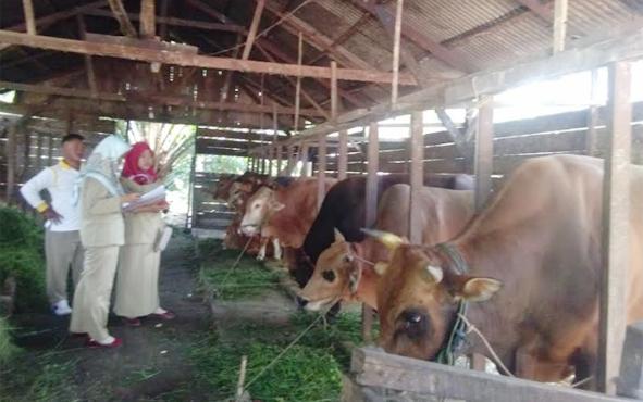Petugas DKPP Kabupaten Sukamara saat melakukan pemeriksaan hewan ternak milik masyarakat.