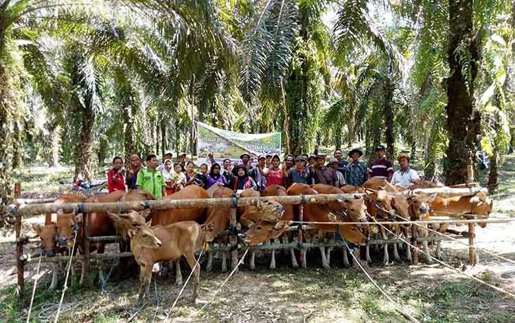 Kelompok peternak sapi Desa Tawan Jaya.