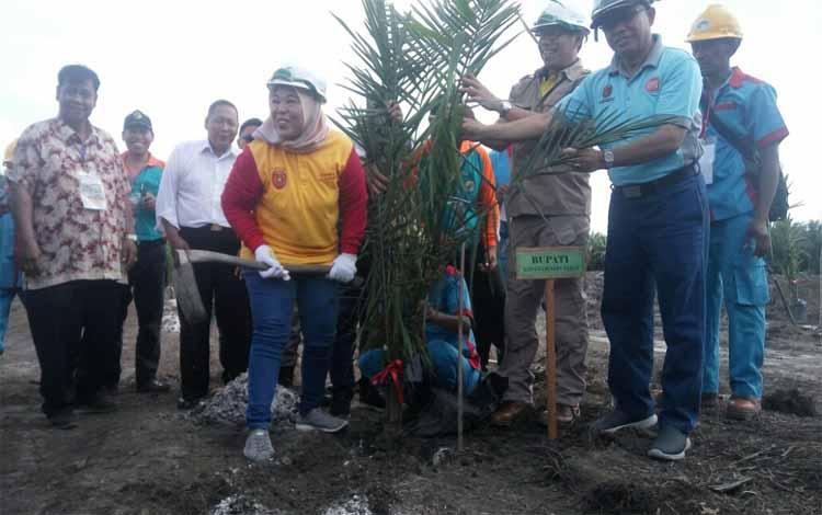 Bupati Kobar, Nurhidayah menanam sawit di areal perkebunan milik KUD Karya Tani, Desa Pandu Senjaya, Jumat (7/12/2018)