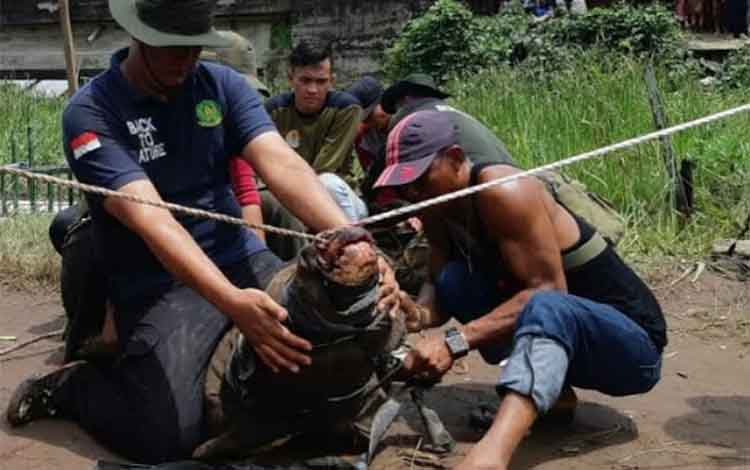 Sejumlah pegawai BKSDA Pos Jaga Sampit saat mengevakuasi buaya.