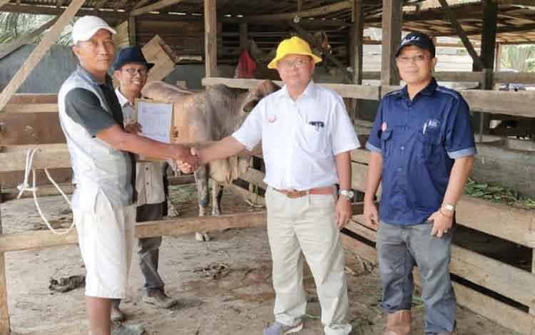 Regional Head 2 SSMS, Rudi  Yanto Sirait, menyerahkan bantuan program plasma sapi kepada kelompok tani rahman Jaya Desa Bukit Jaya, Kecamatan Bulik Timur, kabupaten Lamandau, Sabtu (9/2/2019)