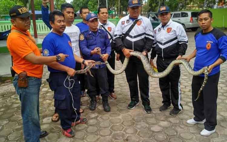 Petugas Damkar Kobar bersama satwa liar yang berhasil diamankan pihaknya.