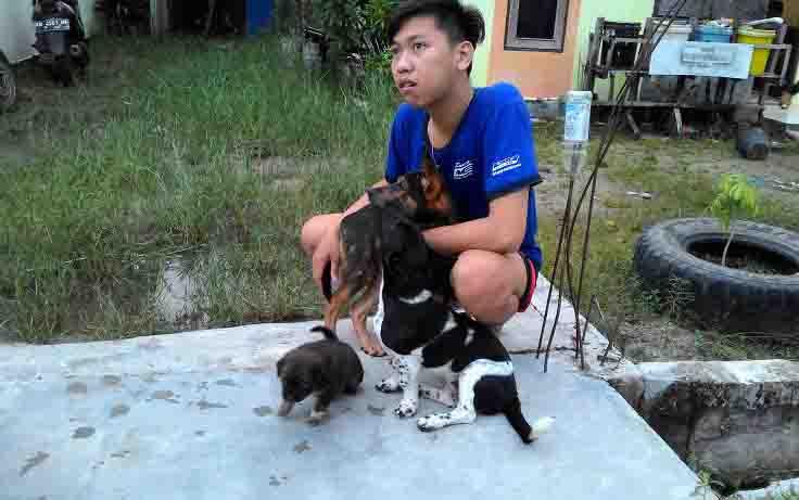 Warga pemelihara anjing di Palangka Raya.