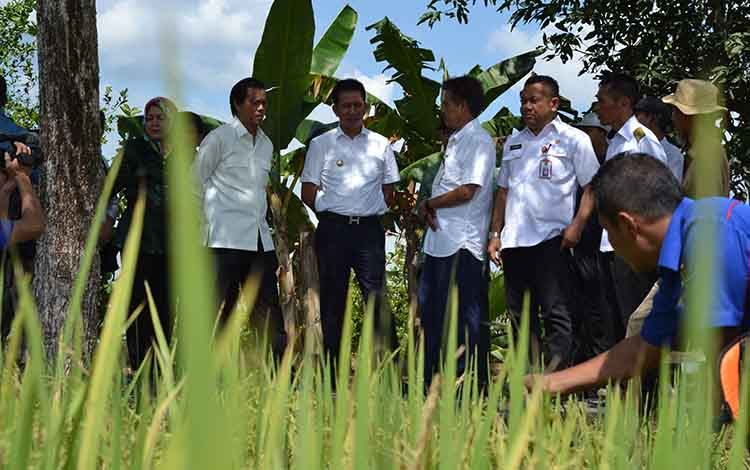 Bupati Barito Utara Nadalsyah bersama anggota DPR RI dan kepala Dinas Pertanian saat meninjau  lokasi pertanian masyarakat di Desa Trahean, Kecamatan Teweh Selatan, beberapa waktu lalu.