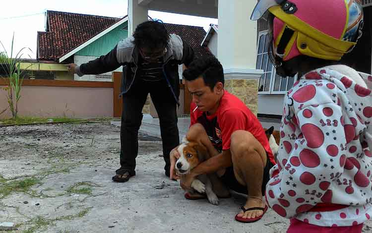 Petugas vaksinasi memberikan vaksin rabies kepada hewan peliharaan masyarakat.