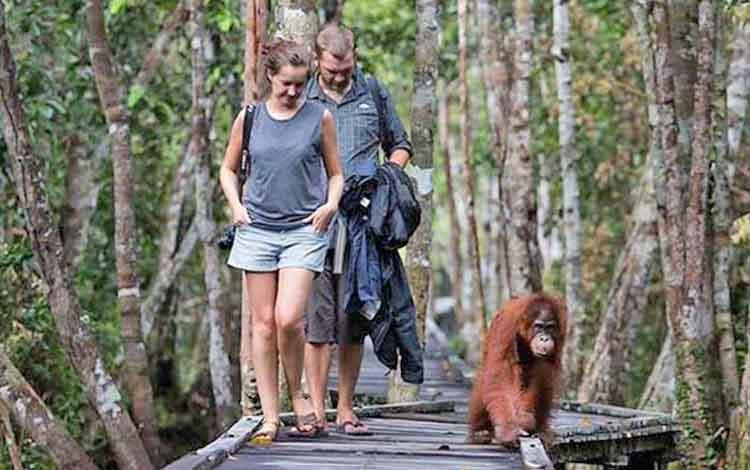 Wisatawan mancanegara di Taman Nasional Tanjung Puting