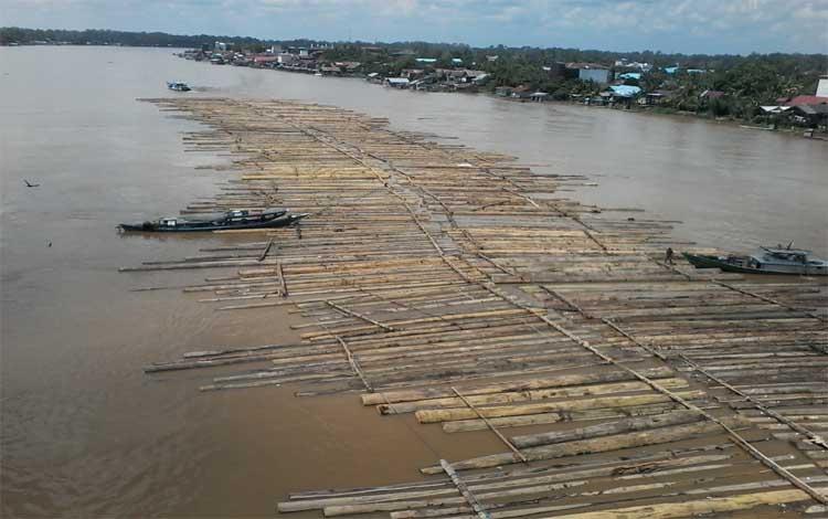 Ribuan log kayu dimilirkan di Sungai Katingan menuju Pegatan, Selasa, 9 Maret 2019