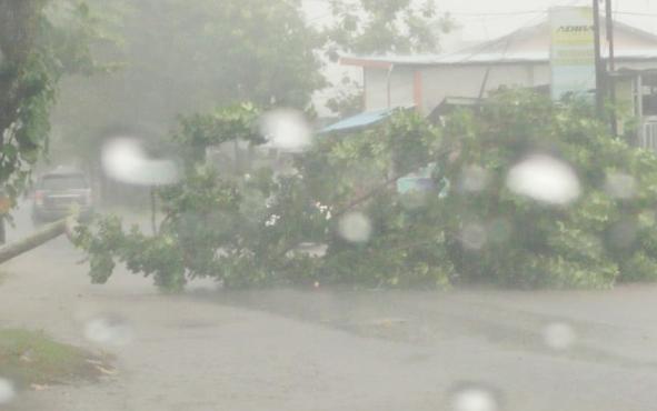 Pohon tumbang di Kota Sampit saat hujan disertai angin kencang, Sabtu, 8 Juni 2019.