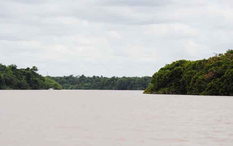 Hutan di Kabupaten Pulang Pisau yang berada di bantaran Sungai Kahayan
