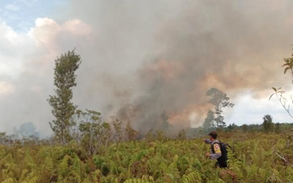 Personel Polsek Jabiren Raya Brigadir Dodi saat memadamkan kebakaran lahan di Tumbang Nusa.