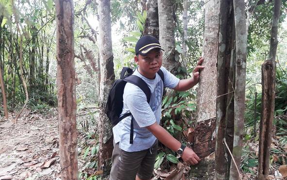 Kepala Desa Teluk Malewai Sugito Rianto saat memperlihatkan kebun karet warganya.