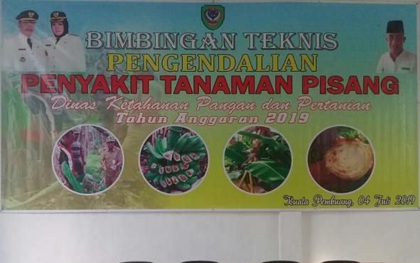 Bimtek pengendalian penyakit pisang kepok bagi petani di Desa Bangun Harja, Kamis, 4 Juli 2019.