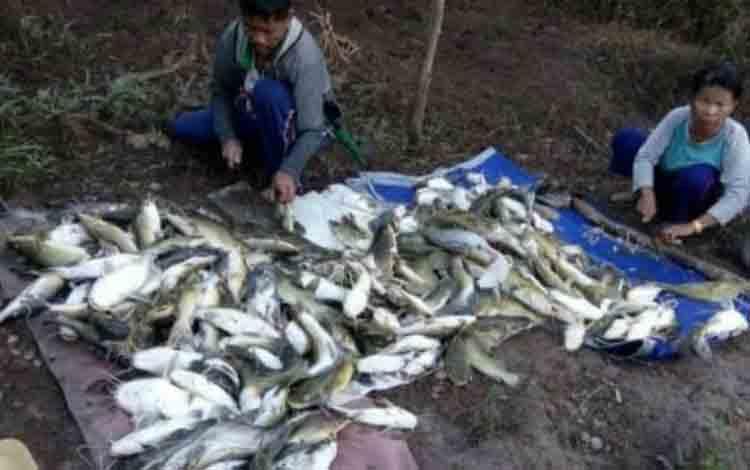 Warga menangkap ikan yang mengapung di aliran Sungai Sampit.