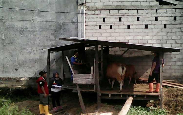 Petugas DKPP Sukamara saat melajukan prgoram upsus siwab
