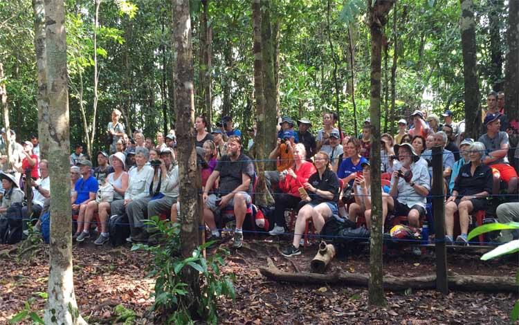 Turis dari kapal pesiar Silver Discoverer melihat orangutan feeding platform di TNTP