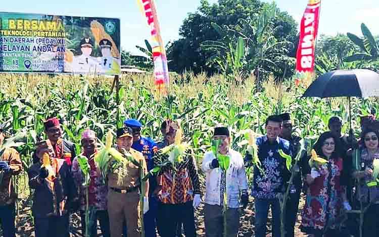 Bupati Barito Utara, Nadalsyah bersama Gubernur Kalimantan Tengah H Sugianto Sabran dan pimpinan daerah lainnya saat melaksanakan panen jagung bersama pada kegiatan PEDA KTNA di Kabupaten Kotawaringin Timur, Senin  8 Juli 2019