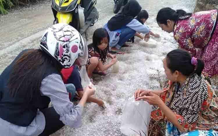 Warga sekitar saat mengumpulkan jelly yang berada di jalan Desa Juking Pajang,Sabtu, 13 Juli 2019