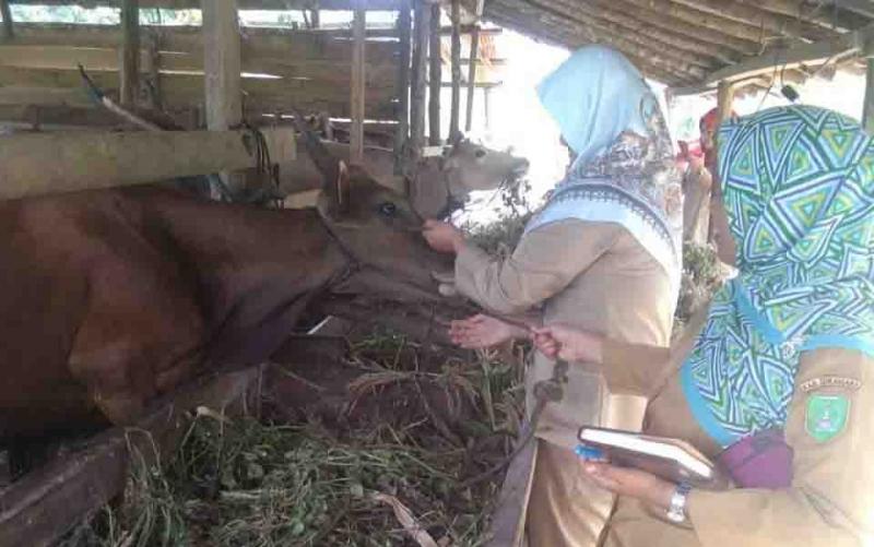 Petugas DKPP Sukamara saat mendata hewan ternak warga.
