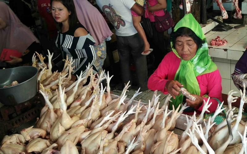 Pedagang ayam di Sampit.