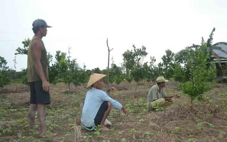 Masyarakat transmigrasi di Desa Pulau Nibung, Kecamatan Jai, Kabupaten Sukamara.