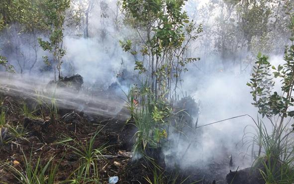 Kebakaran lahan gambut di Desa Sungai Bakau, Kecamatan Seruyan Hilir Timur.