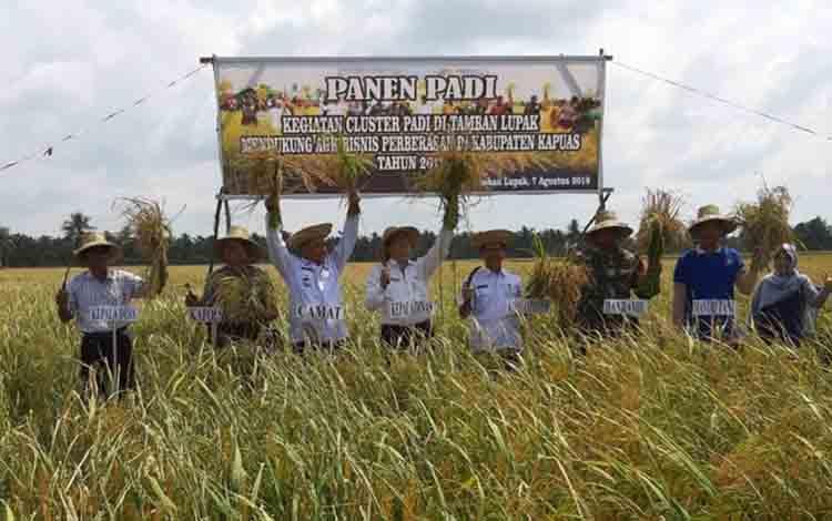 Kepala Dinas Pertanian Kapuas Anjono Bhakti ikut panen padi kegiatan cluster kelompok tani Sari Mulya, Desa Tamban Lupak, baru-baru ini.