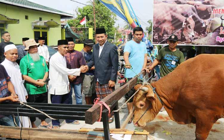 Bupati Barito Utara, Nadalsyah menyerahkan sapi kepada panitia kurban Masjid Al Huda, Minggu 11 Agustus 2019