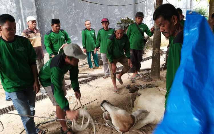 Prosesi penyembelihan hewan kurban di Masjid Muhajirin