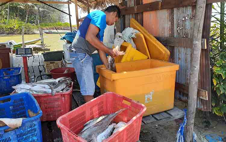Sajeli oengepul ikan di Desa Cabang Barat, Kecamatan Pantai Lunci.