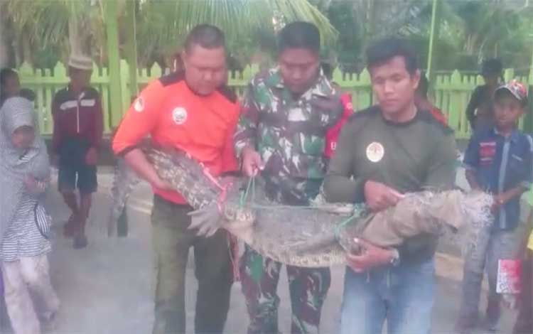 Petugas BKSDA bersama TNI saat mengevakuasi buaya yang terperangkap di jaring warga, Minggu, 25 Agustus 2019
